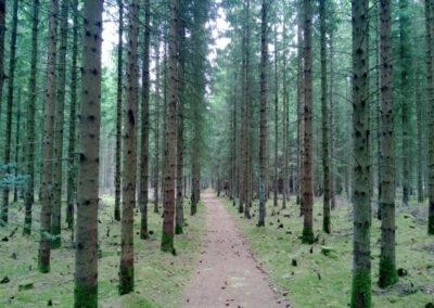 Naturområde i Norden