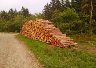 Træstammer i skovområde