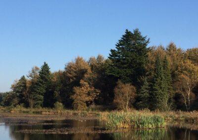 Skovsø og træer